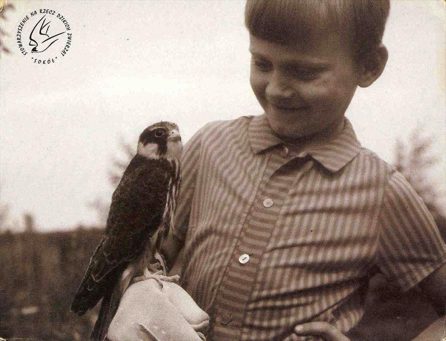 Young Polish falconer Janusz Sielicki