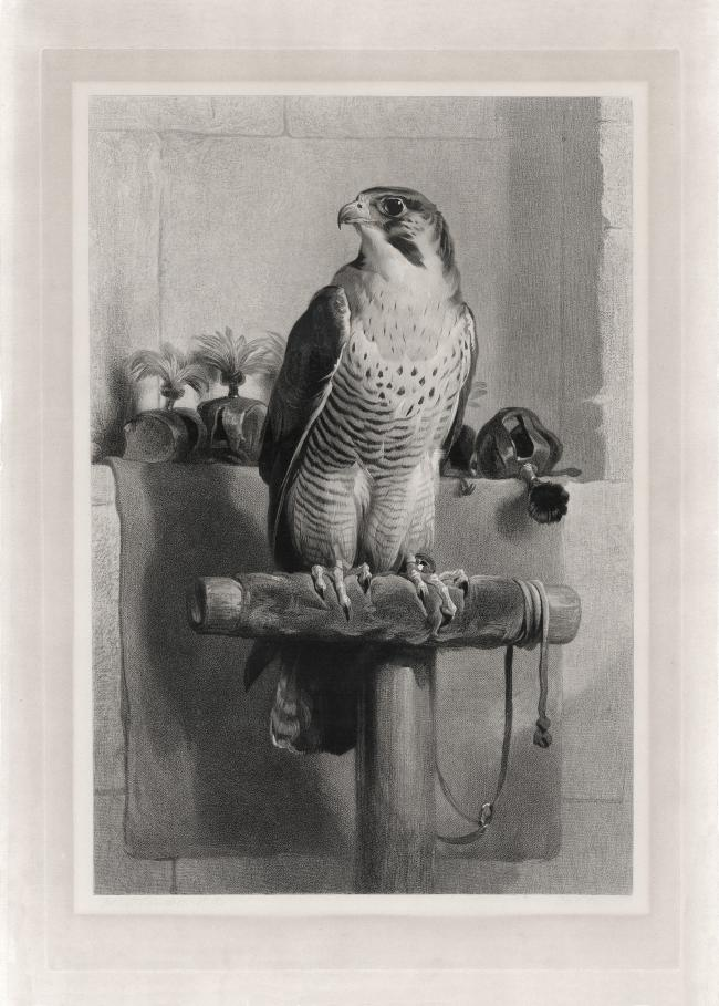 Falcon 2 by Landseer in 1837 in high resolution