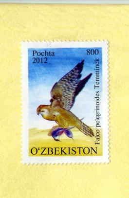 Post stamp from Uzbekistan with a picture of Red-naped Shaheen Falco pelegrinoides Temminck