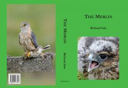 The Merlin by Dr Richard Sale