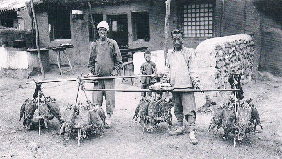 Chinese traders by falcons