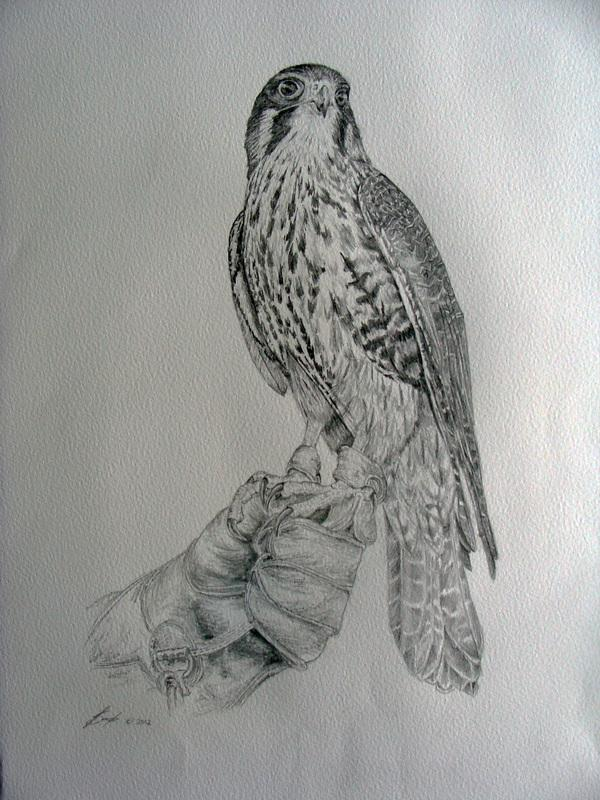 The New Zealand Falcon on glove - art by Ms Ineke Smets