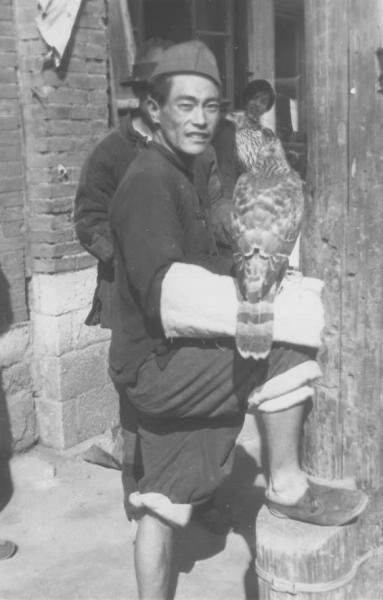 Falconer with Goshwak 2 in the 1930s