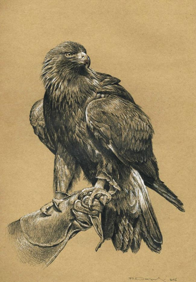 Adonis, the Golden Eagle of the Munich zoo by Paschalis Dougalis