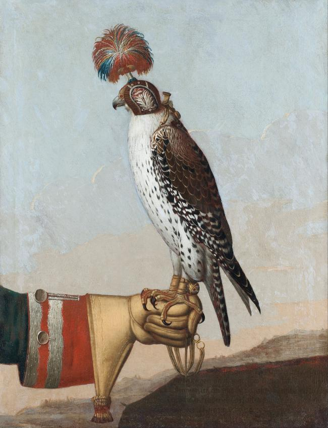 Icelandic Gyrfalcon - Islandic Gerfalcon made in 1759 by unknown artist