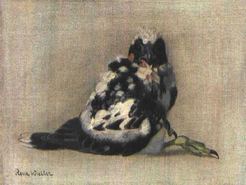 Young Peregrine Falcon by Renz Waller (1895-1979)