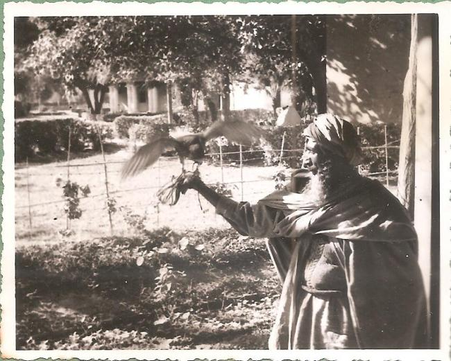 Falconer with a hawk photographed by Eustace Poles in Kashmir in 1945-1946
