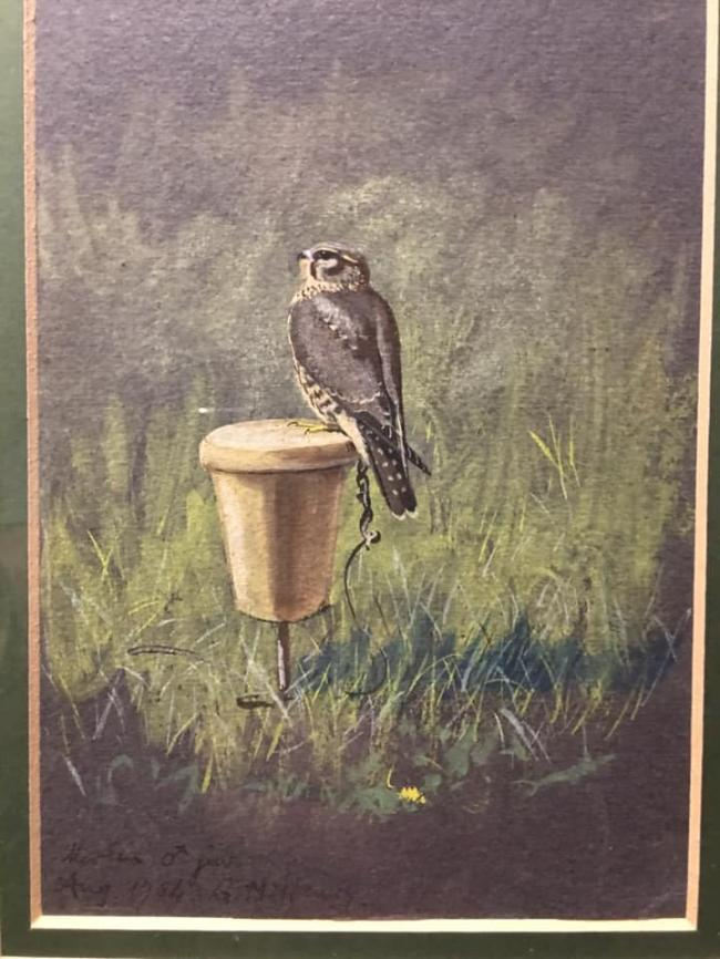 little sketch of a merlin by G M Henry