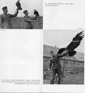 Falconry in Ortelsburg in former East Prussia - now Szczytno in Poland 25